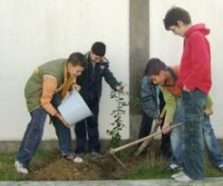 Plantacao de azevinho